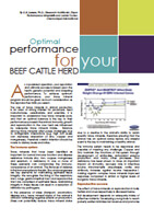 Optimal Performance For Your Beef Cattle Herd
